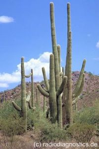 18. Saguaro Nationalmonument